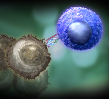 T-cells-and-cancer